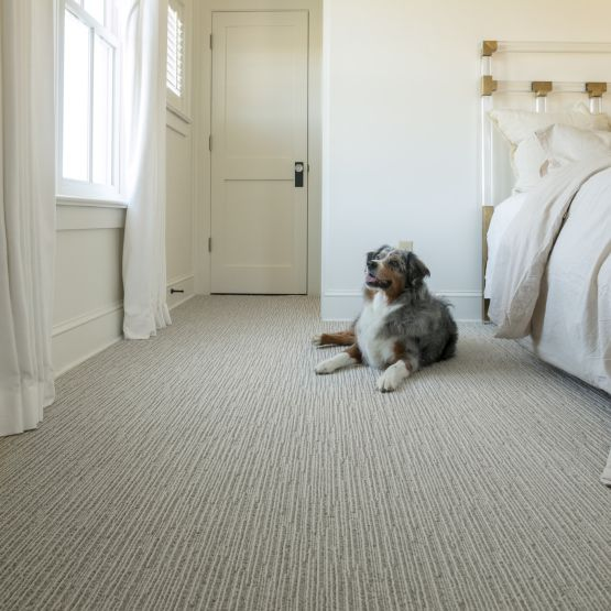 light warm grey carpet in bedroom