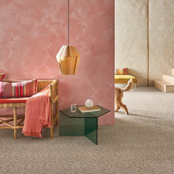 tan carpet in orange room